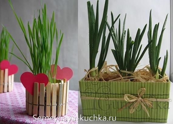 как прорастить лук дома