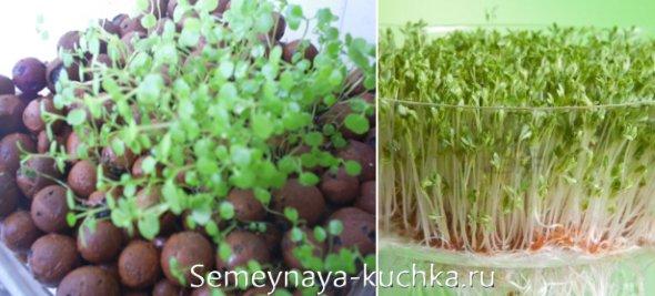 как выращиват кресс-салат в домашних условиях