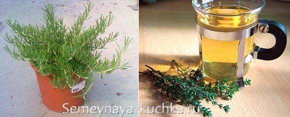 как вырастить зелень тимьяна дома