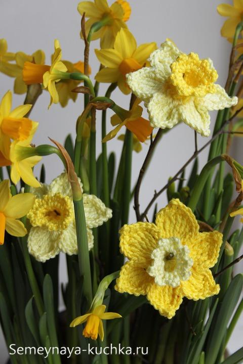 цветы нарциссы крючком
