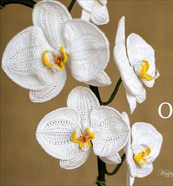 орхидея крючком