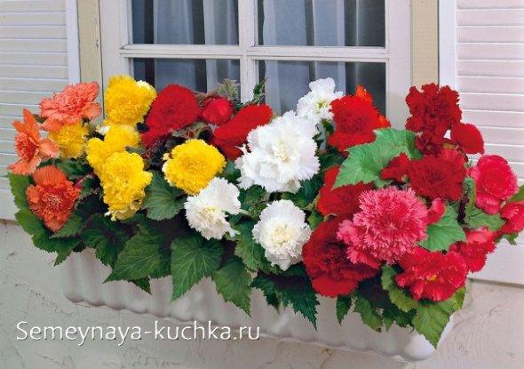 осенние цветы в саду