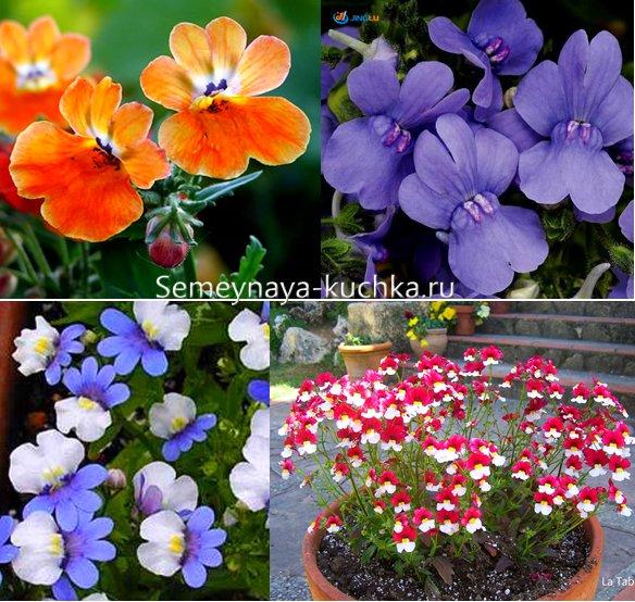 названия осенних цветов