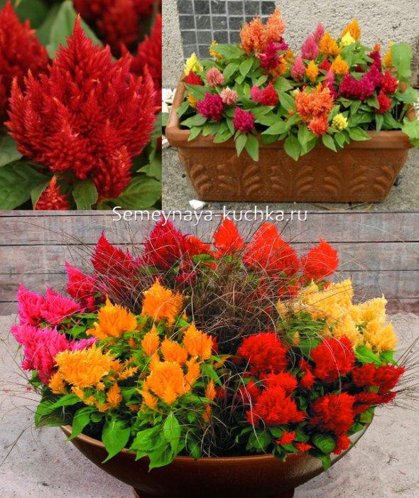 яркие осенние цветы