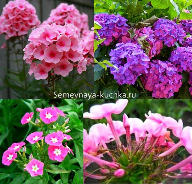 осенние цветы многолетники