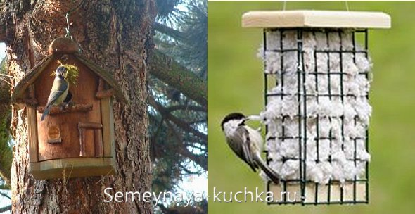 как помочь птицам заселить скворечник