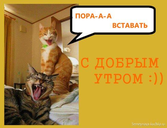 картинки доброе утро с котами