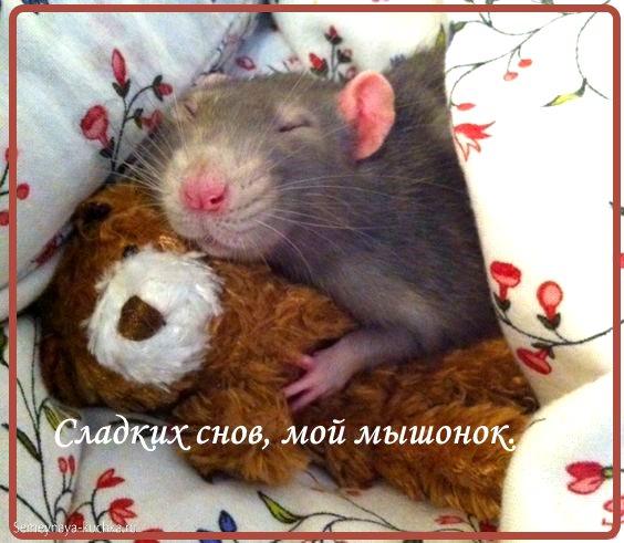 спокойной ночи картинки мужу