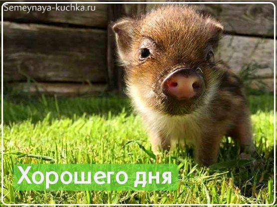 картинки хорошего дня с животными