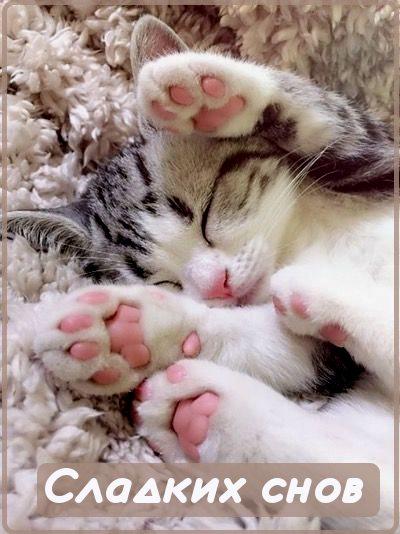 сладких снов картинка