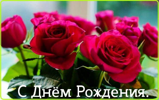 красивые розы с днем рождения