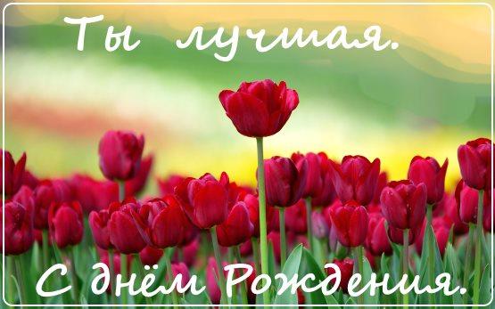 красивые цветы с днем рождения