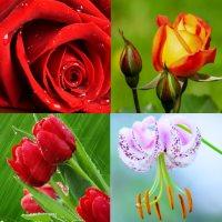 картинки красивые цветы