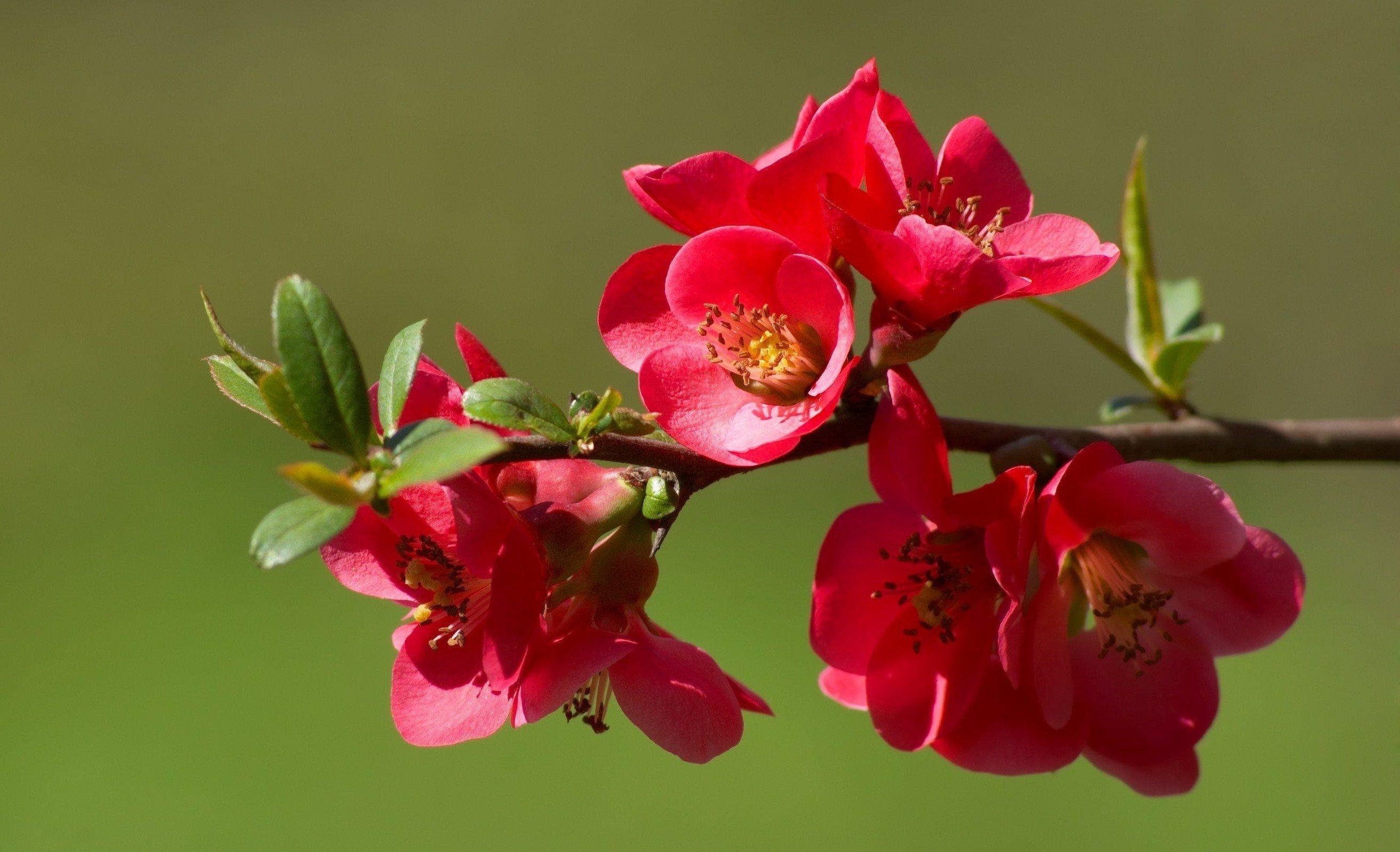 красивые цветы на ветке фото