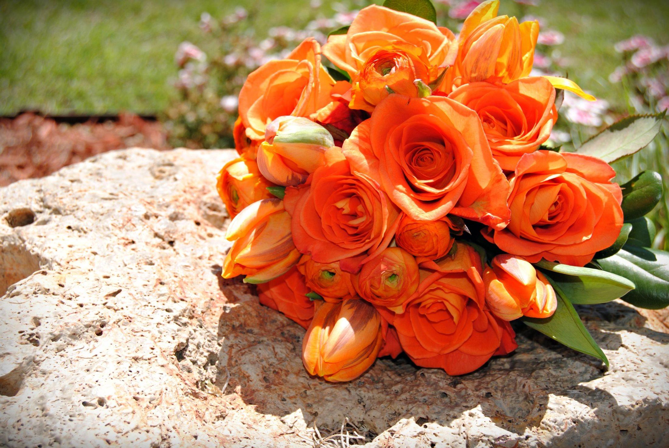 красивые цветы розы чайные картинка обои