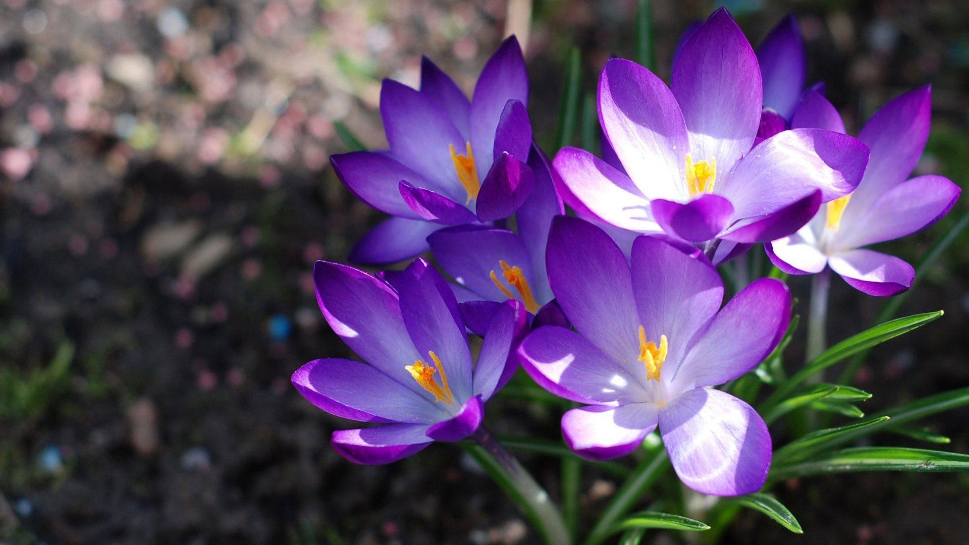 красивые цветы картинка на рабочий стол