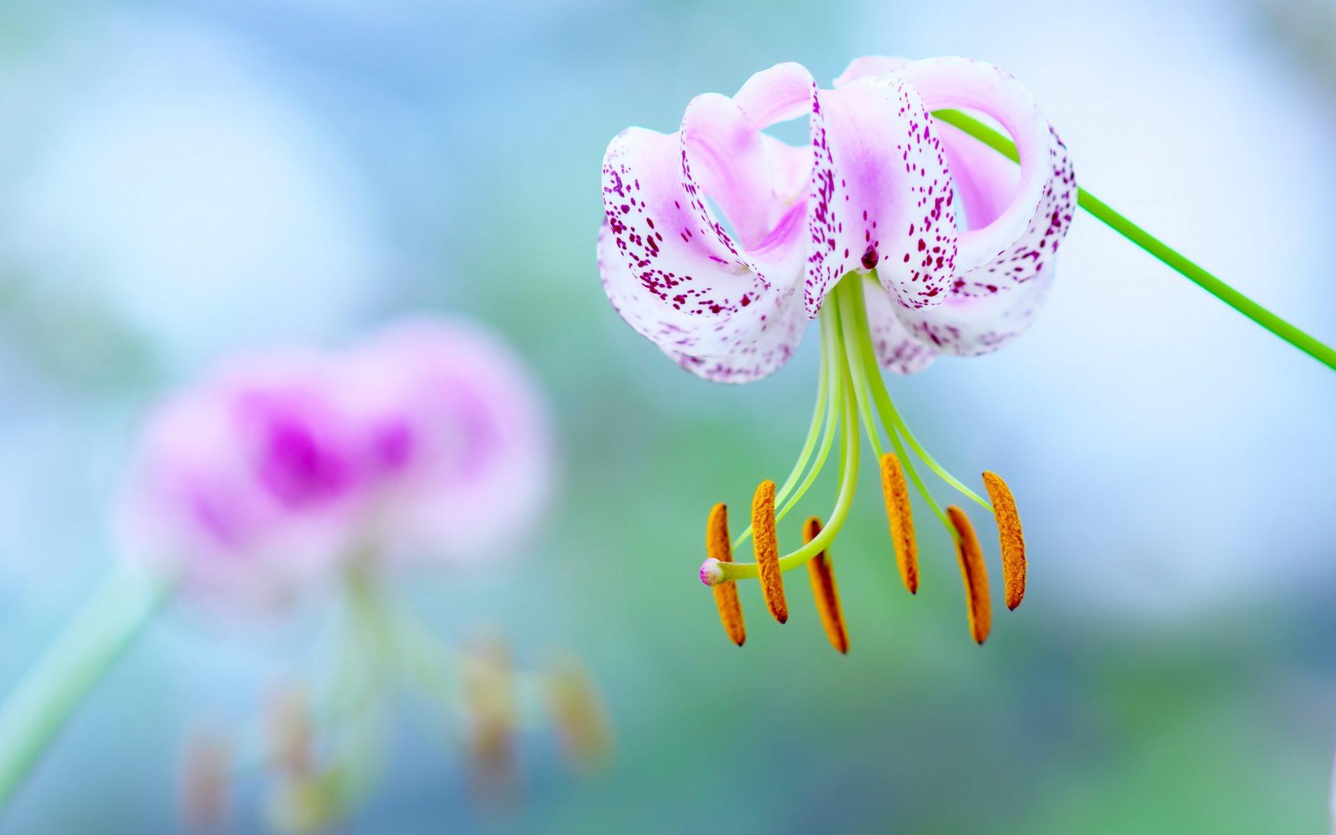 красивый цветок обои на рабочий стол