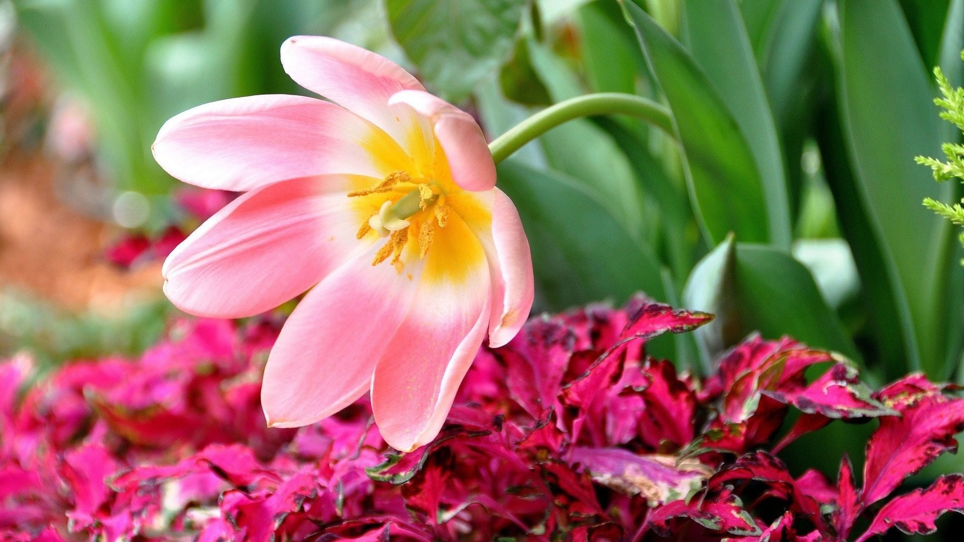 красивый цветок картинка хорошее качество