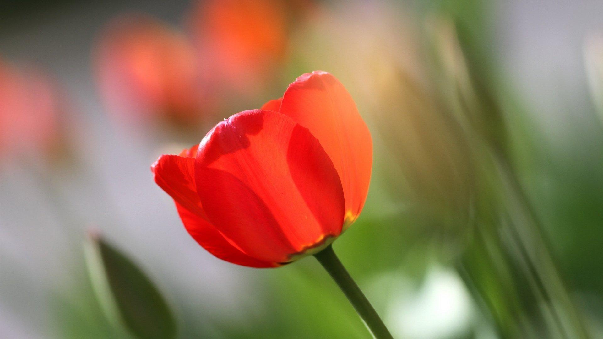 красивый цветок картинка