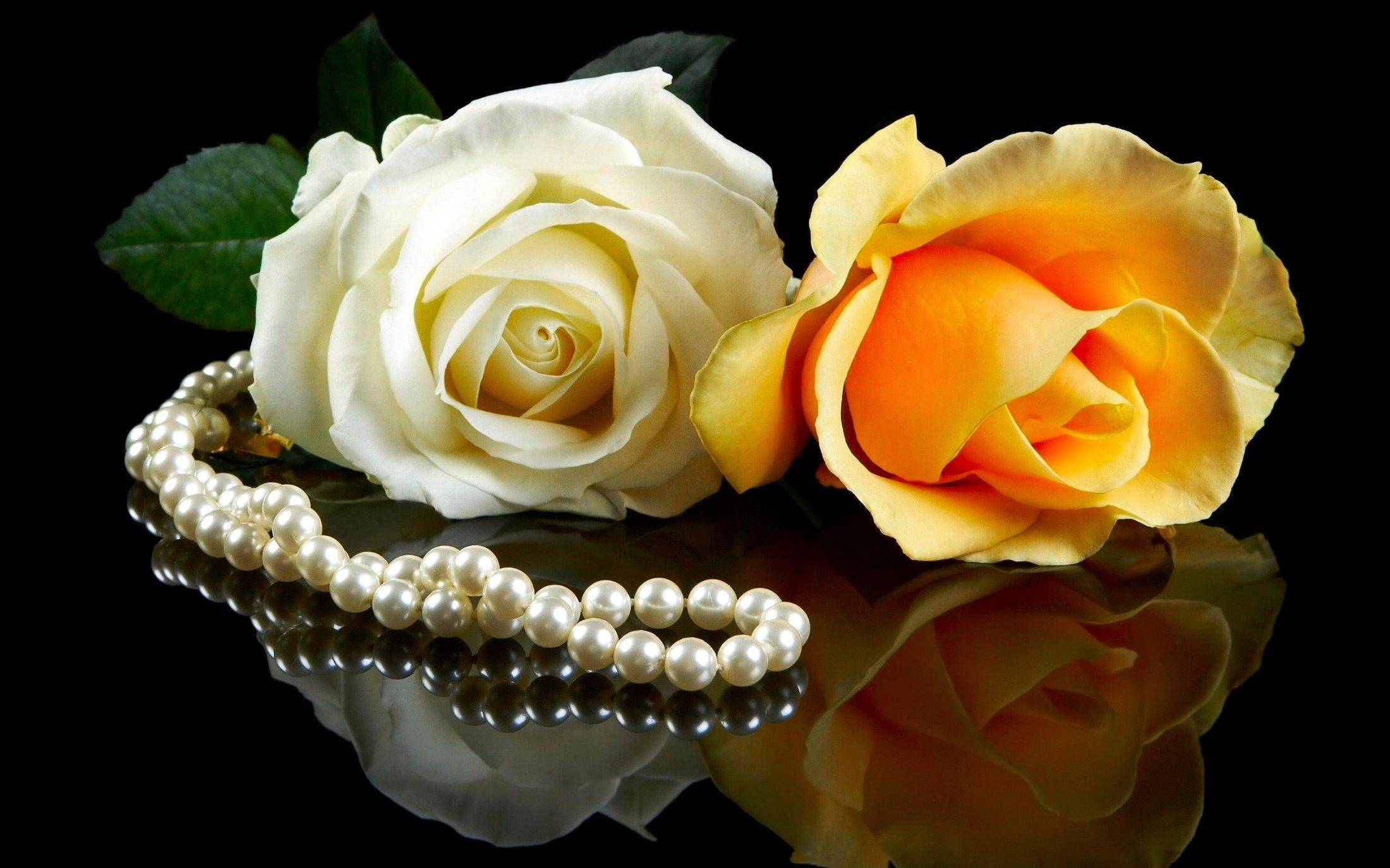 красивые розы супер картинка