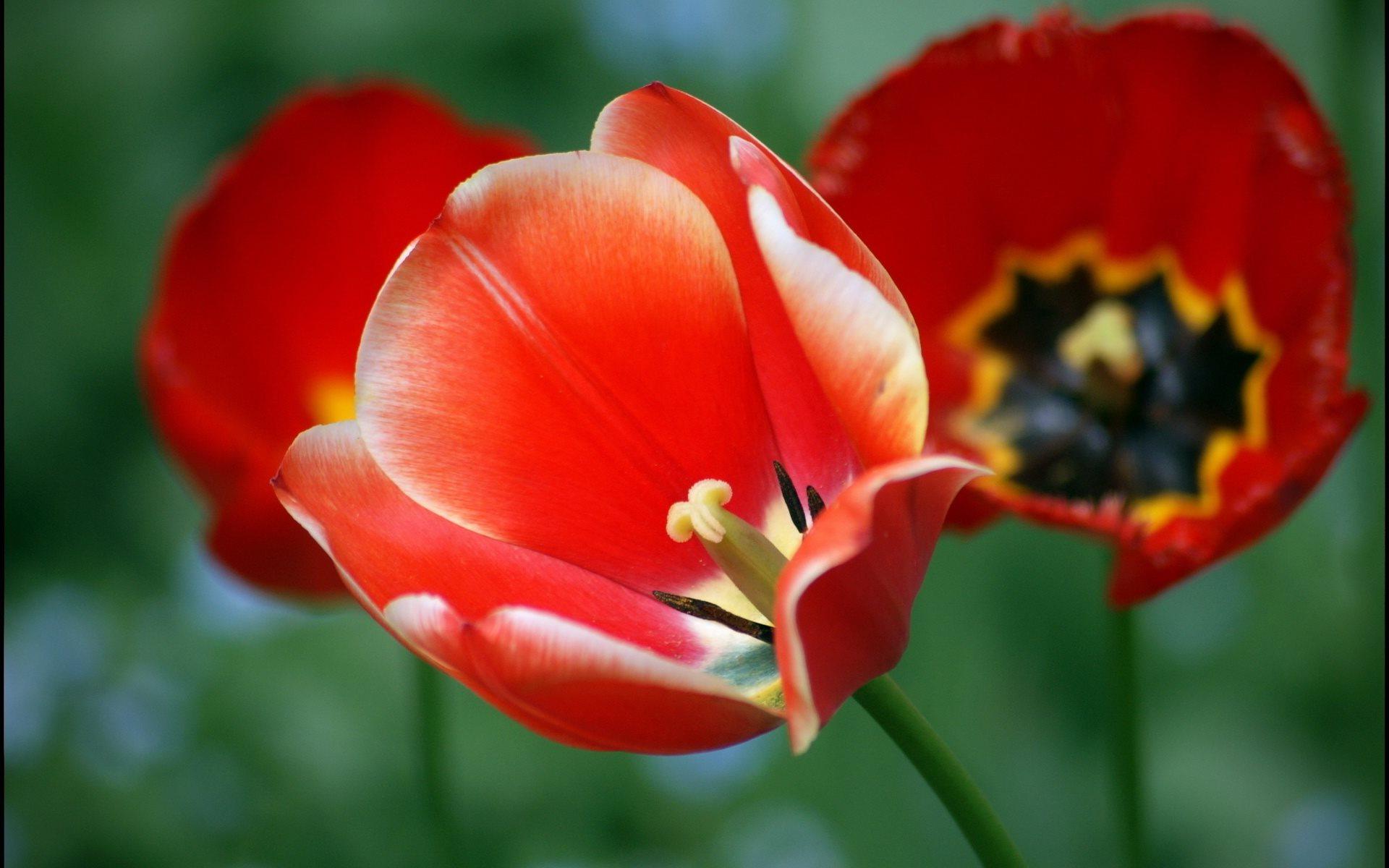 красивые цветы картинки высокого разрешения