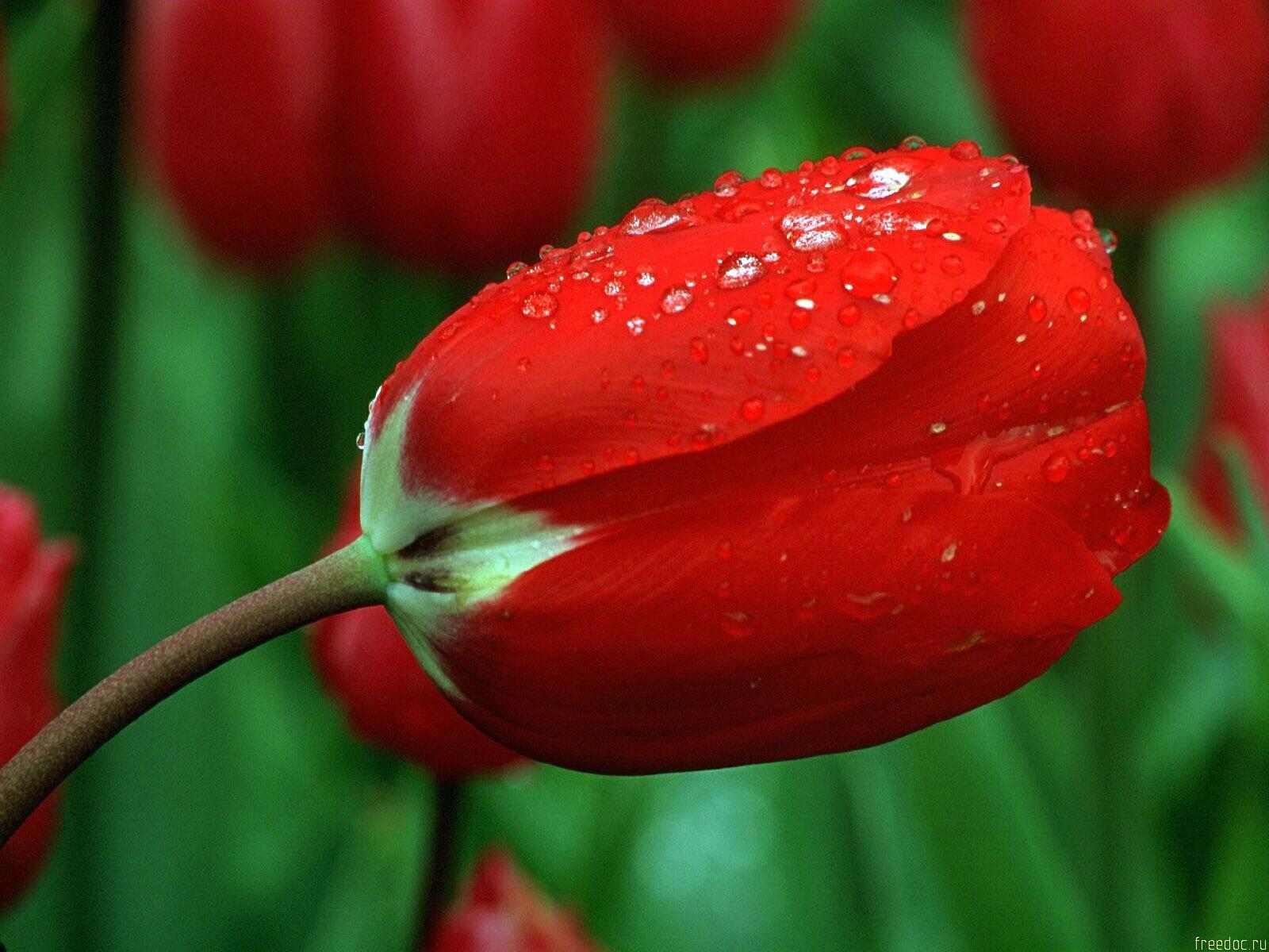 красивый цветок картинка высокого качества