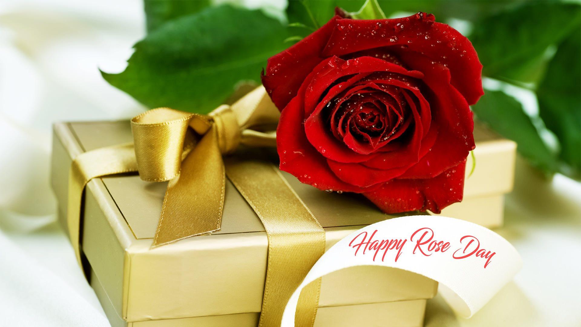 красивые цветы роза
