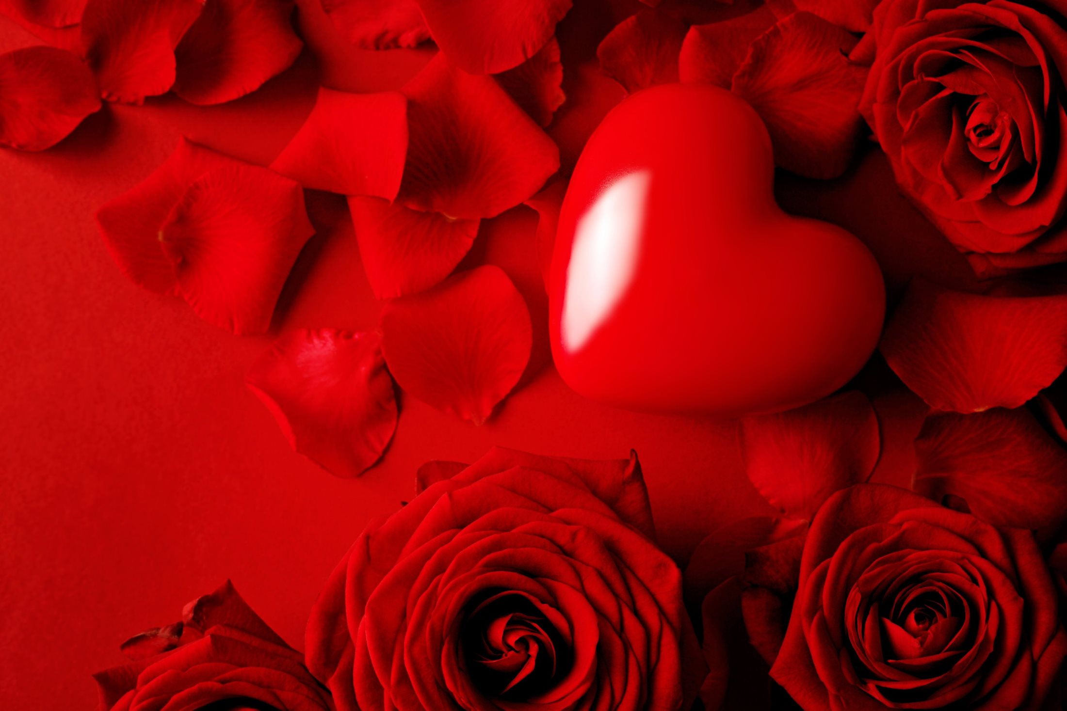 красивые цветы розы красные на обои экрана