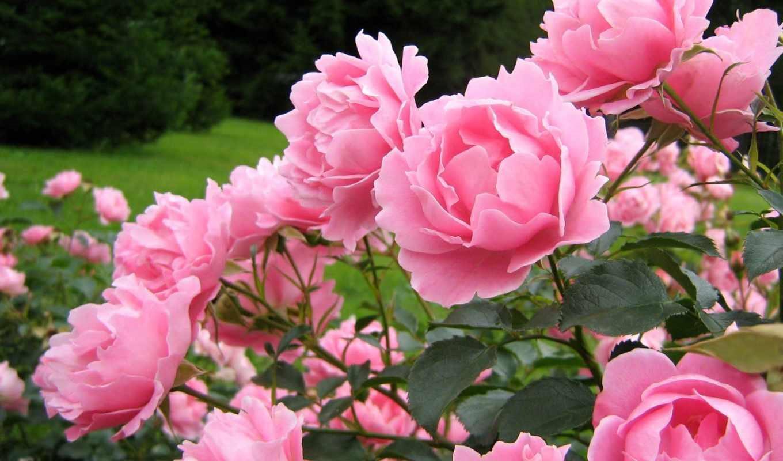 самые красивые цветы картинка