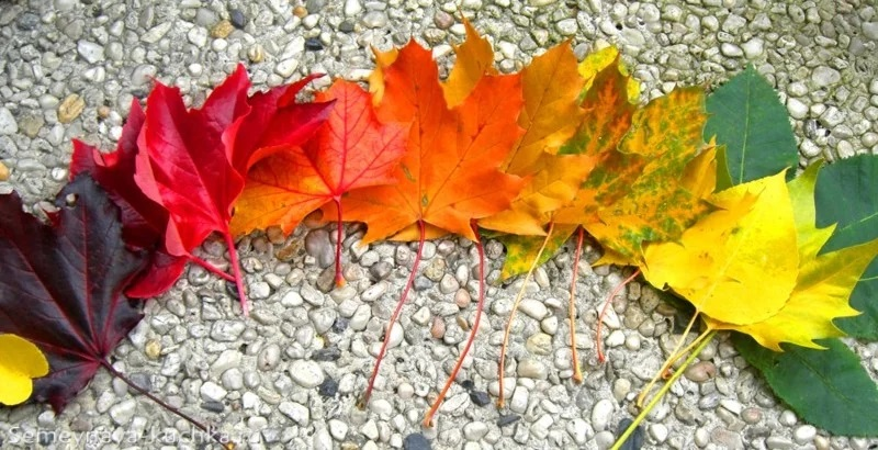 дидактические картинки осень для детского сада