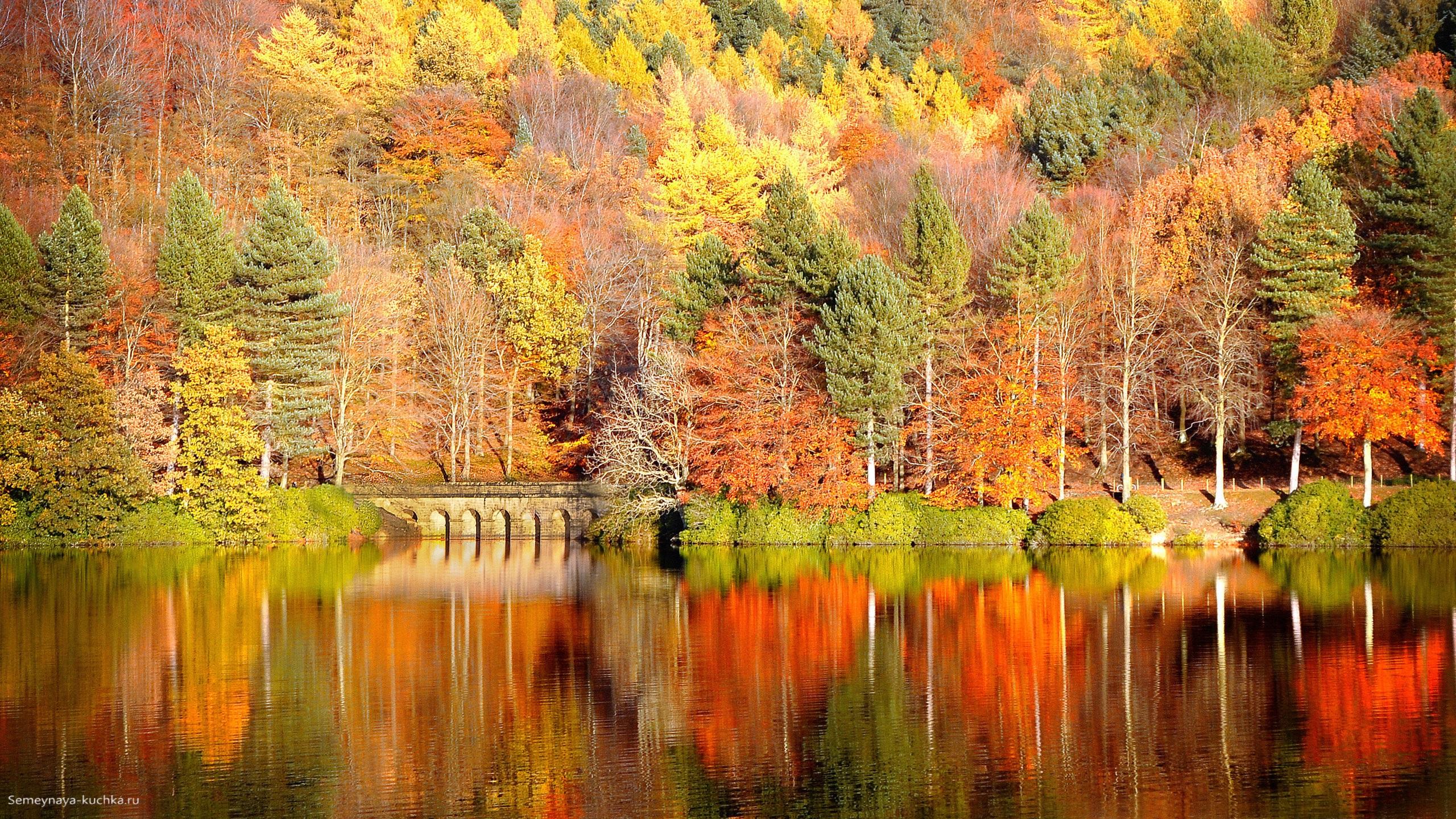 картинки осень в лесу для детского сада
