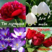 КРАСИВЫЕ цветы (55 фото c пожеланиями для Любимых).