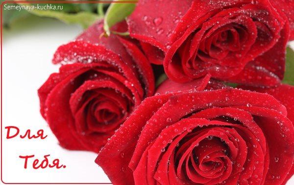 красивые розы картинки цветы