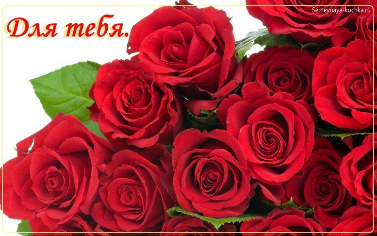фото красивые розы красные
