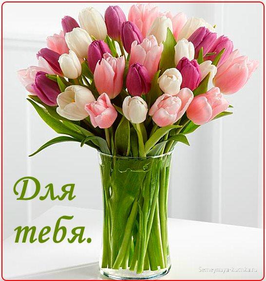 красивые цветы букет тюльпанов