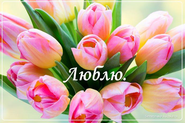 картинка красивые цветы