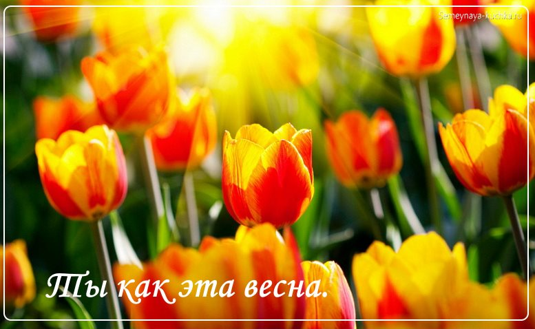 красивые цветы тюльпаны