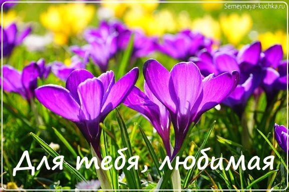 красивые цветы фото хорошее качество