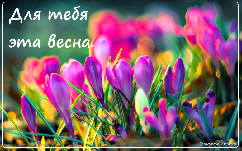 картинка красивые цветы весна