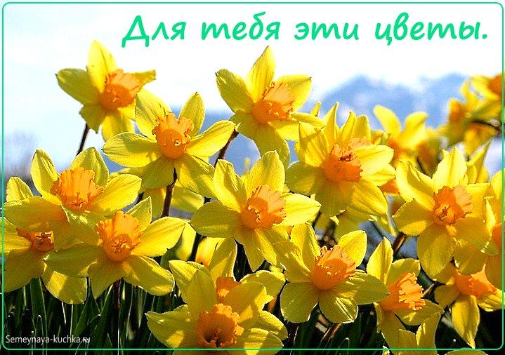 цветы красивые картинка нарциссы
