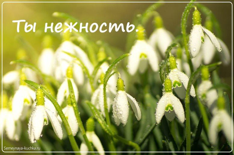 цветы подснежники красивые