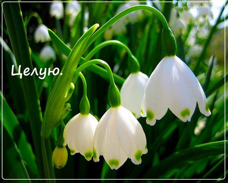 цветы красивые ландыши