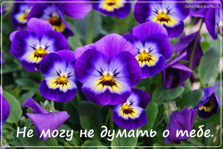 красивые цветы незабудки картинка