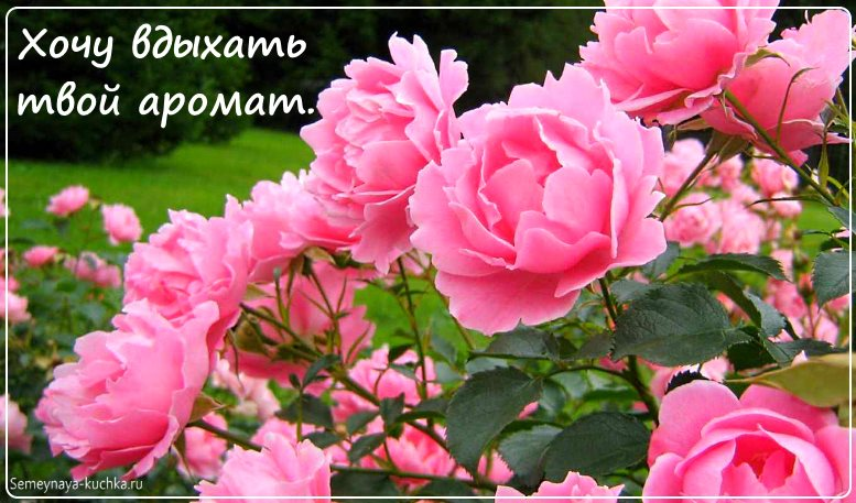красивые цветы открытка пионы