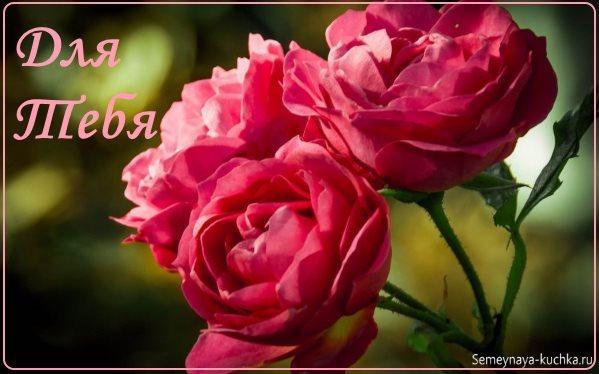 роскошные розы для любимой женщины