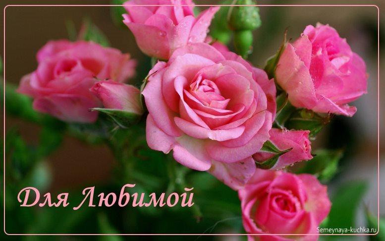 розовые розы красивые картинки