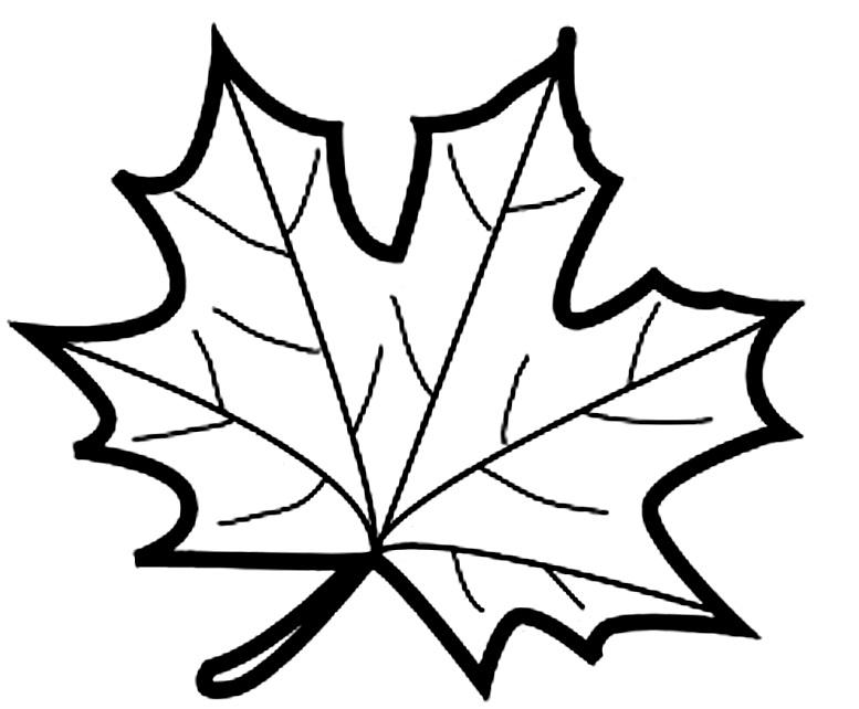 шаблоны листьев кленовый