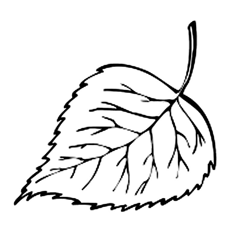 шаблоны листьев береза