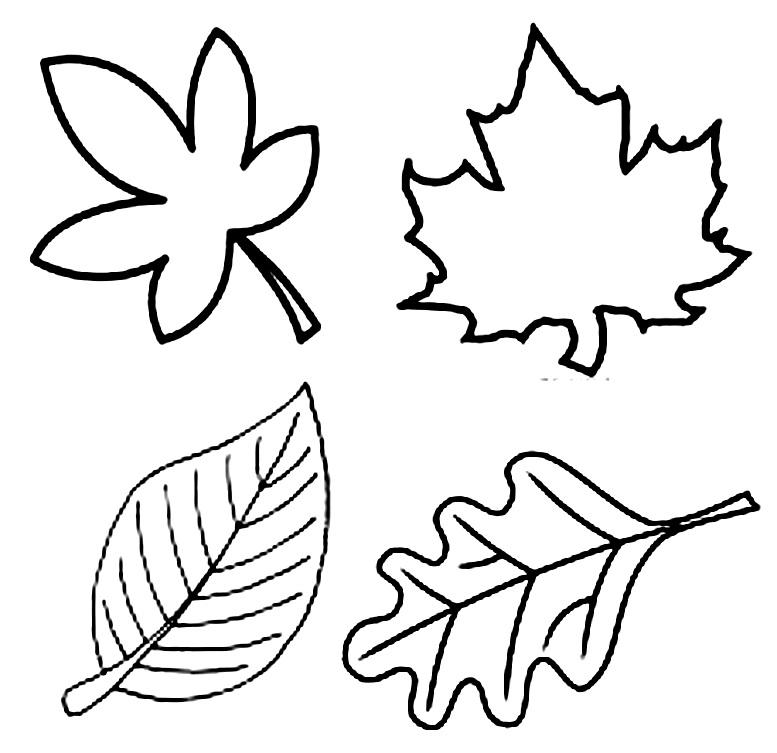 шаблоны контуры осенних листьев
