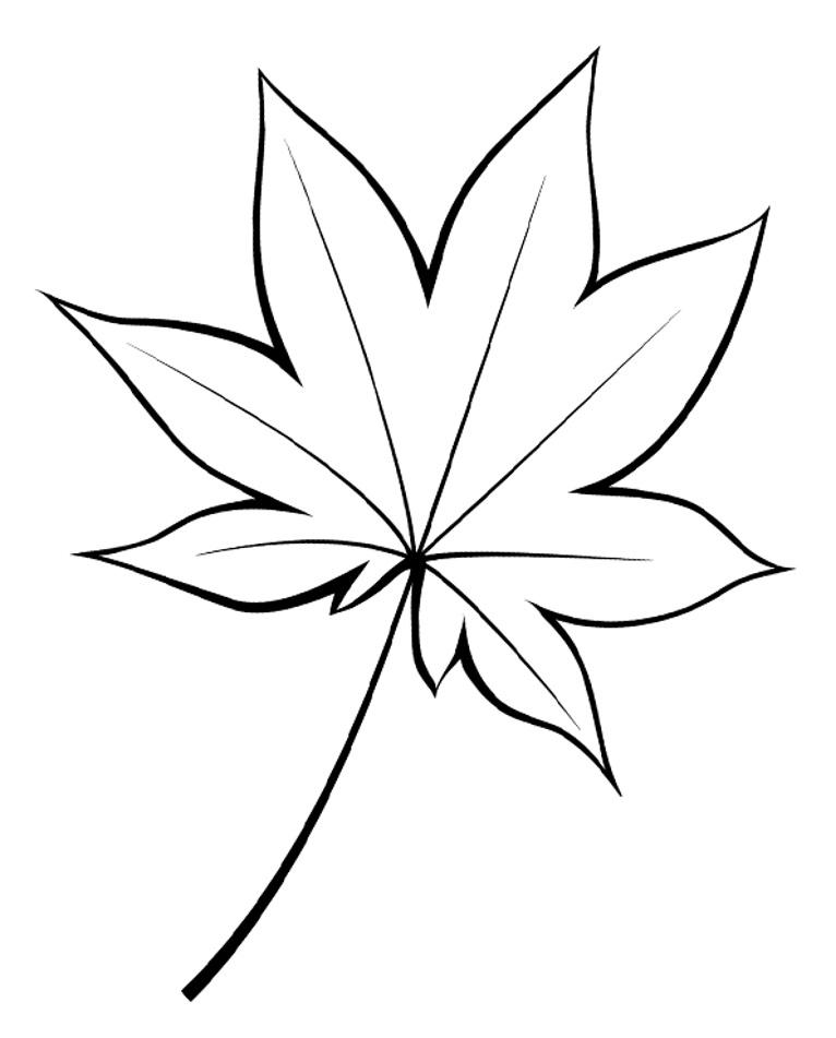 шаблон кленового листа красивый